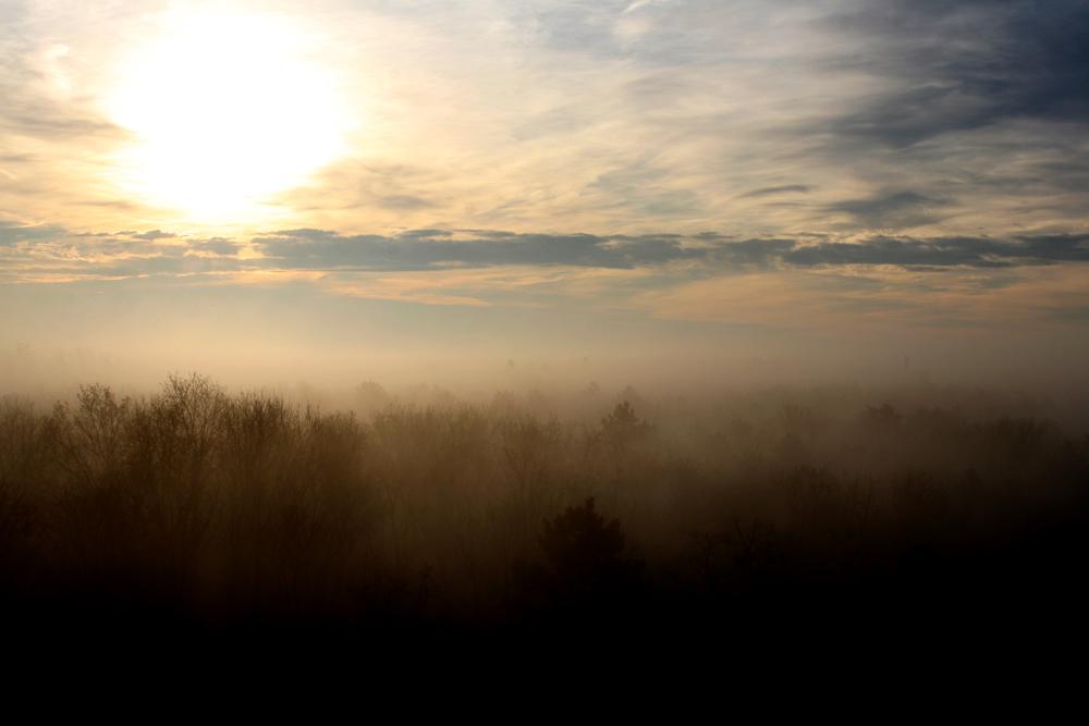 Nebel über den Bäumen, darüber Sonne